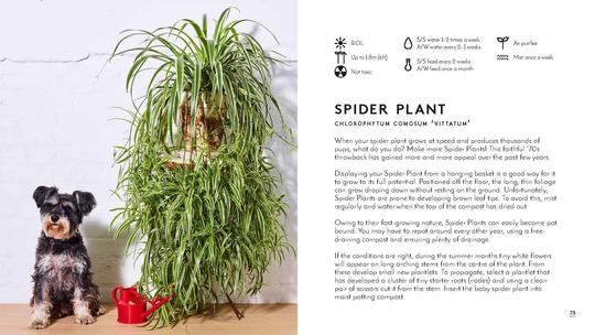 גרין קווין, ספרי מתנה: Little Book, Big Plants ספר גידול צמחי ענק